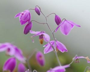 Wildflowers in the Langtang Valley, Nepal